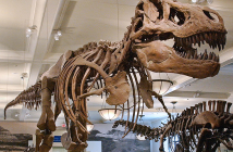 Musee d'histoire naturelle New York