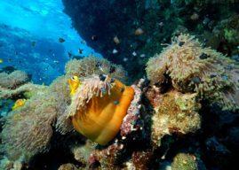 Où faire du snorkeling au Portugal ?